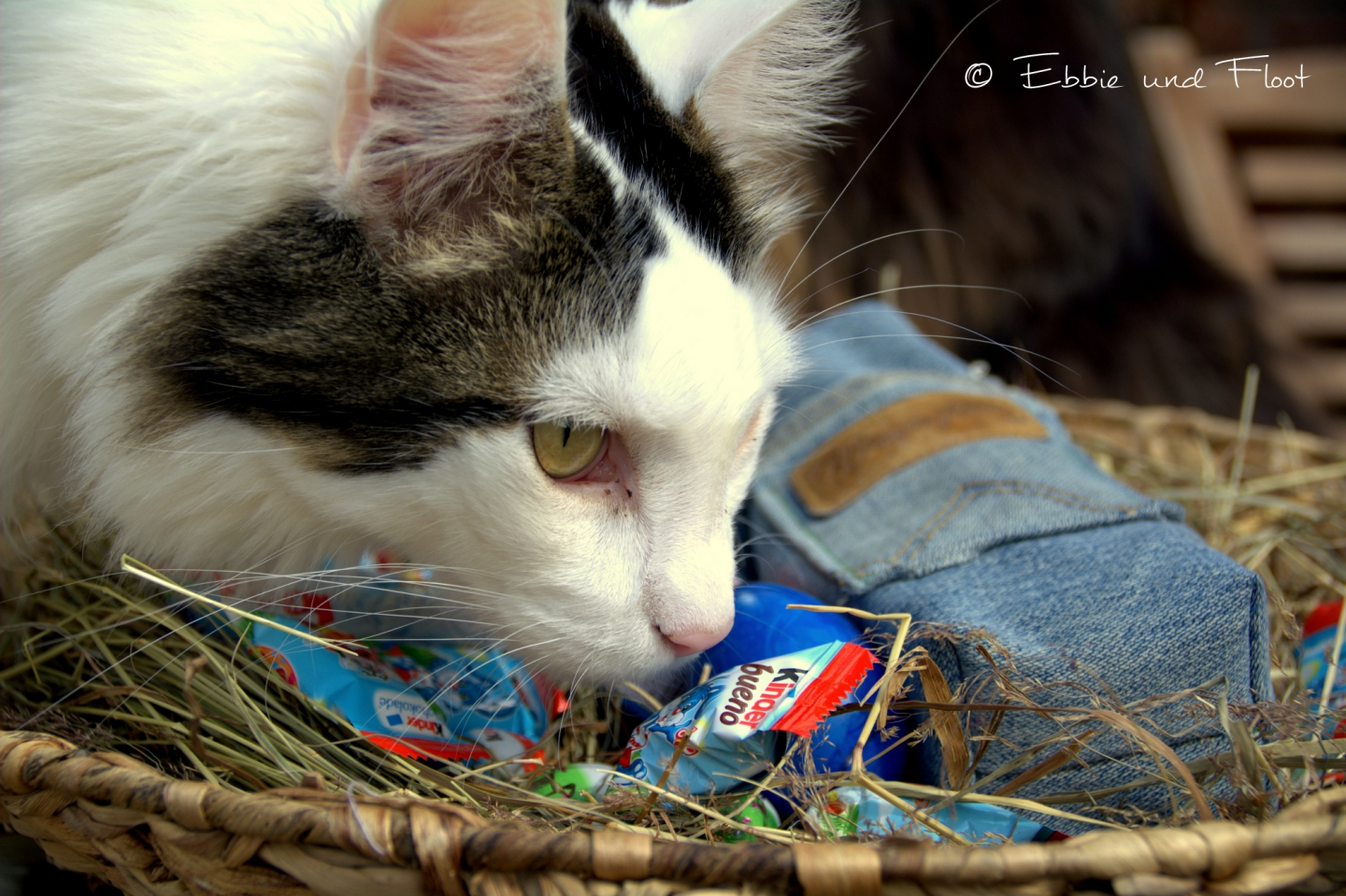 ebbie-und-floot_denim_Jeans_Flaschentasch_Flata_upcycling_Maine-coon_0018.NEF
