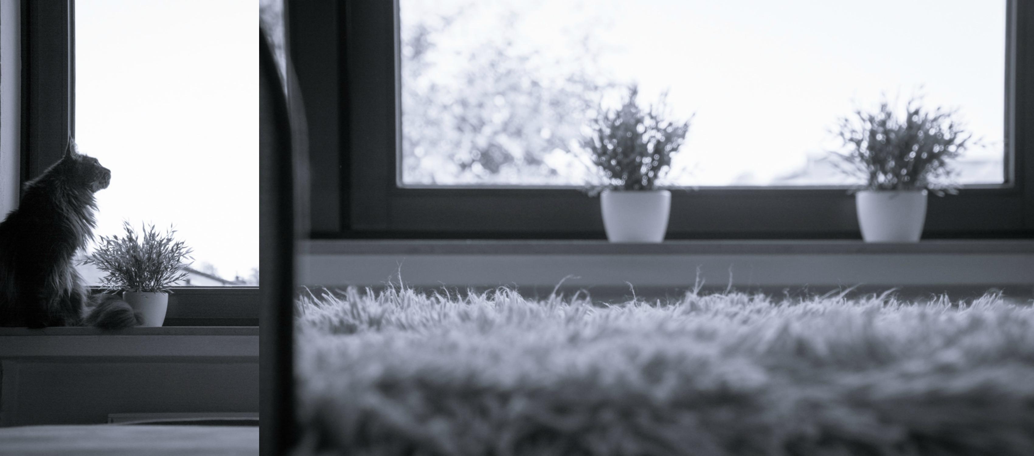 ebbie-und-floot_maine-coon_Katze_Fenster